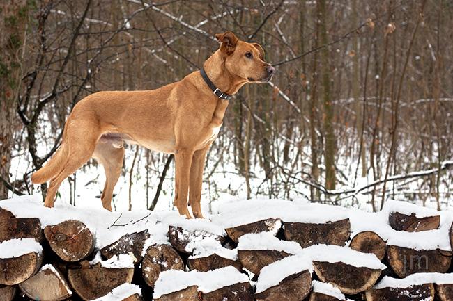 Hunde Fotograf Göttingen, Hunde Fotografie Göttingen, Jonathan Michaeli Fotografie, jo-foto